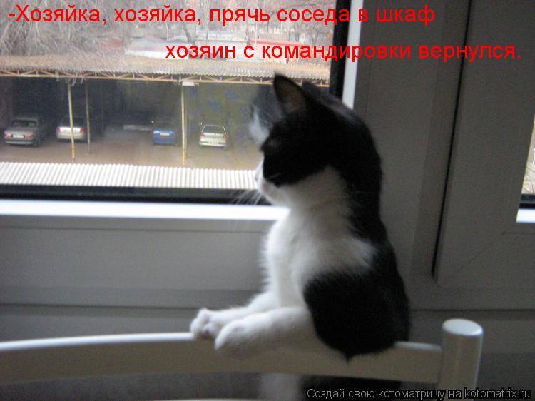 Котоматрица: -Хозяйка, хозяйка, прячь соседа в шкаф хозяин с командировки вернулся.