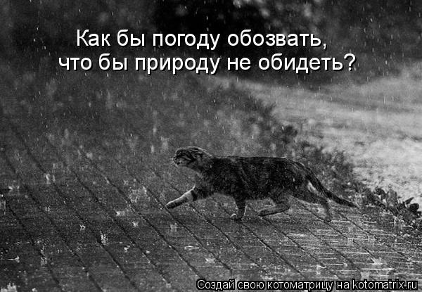 Котоматрица: Как бы погоду обозвать, что бы природу не обидеть?