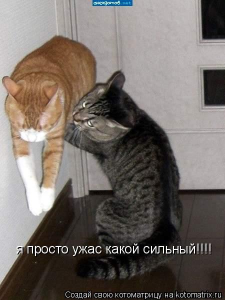 Котоматрица: я просто ужас какой сильный!!!!