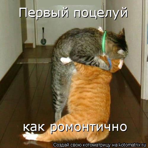 Котоматрица: Первый поцелуй как ромонтично