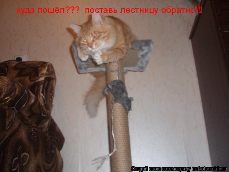 Котоматрица: куда пошёл???  поставь лестницу обратно!!!