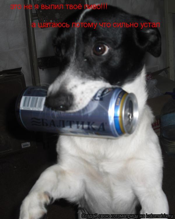 Котоматрица: это не я выпил твоё пиво!!! а шатаюсь потому что сильно устал