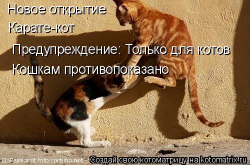 Котоматрица: Новое открытие Карате-кот Предупреждение: Только для котов Кошкам противопоказано