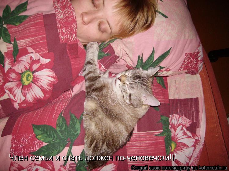 Котоматрица: Член семьи и спать должен по-человечски!!!
