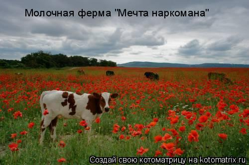 "Котоматрица: Молочная ферма ""Мечта наркомана"""