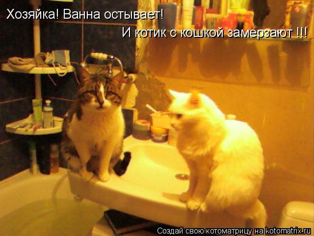 Котоматрица: Хозяйка! Ванна остывает!  И котик с кошкой замерзают !!!