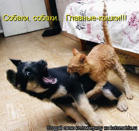 Котоматрица: Собаки, собаки... Главные-кошки!!!