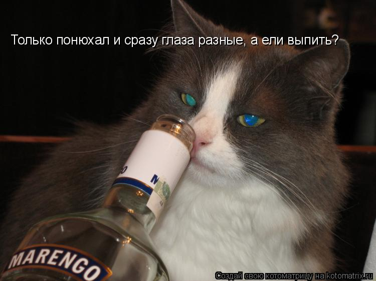 Котоматрица: Только понюхал и сразу глаза разные, а ели выпить?