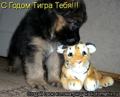 Котоматрица: С Годом Тигра Тебя!!!