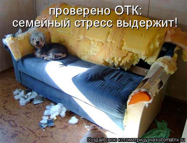 Котоматрица: проверено ОТК:  семейный стресс выдержит!