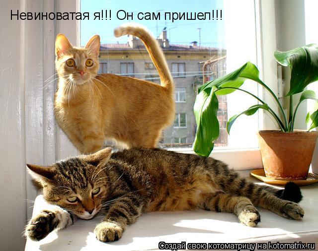Котоматрица: Невиноватая я!!! Он сам пришел!!!