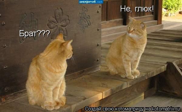 Котоматрица: Брат??? Не, глюк!