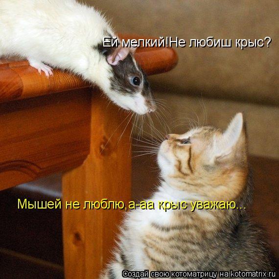 Котоматрица: Ей мелкий!Не любиш крыс? Мышей не люблю,а-аа крыс уважаю...