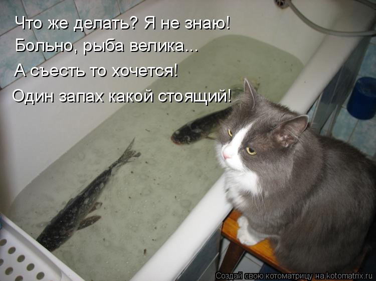 Котоматрица: Что же делать? Я не знаю!  Больно, рыба велика... А съесть то хочется! Один запах какой стоящий!