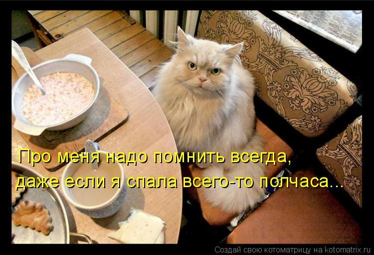 Котоматрица: Про меня надо помнить всегда, даже если я спала всего-то полчаса...