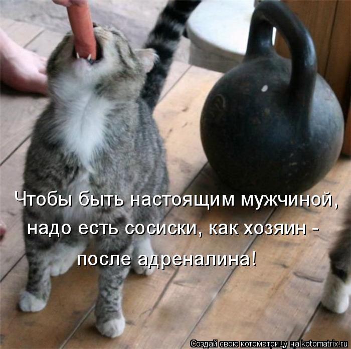 Котоматрица: Чтобы быть настоящим мужчиной, надо есть сосиски, как хозяин - после адреналина!
