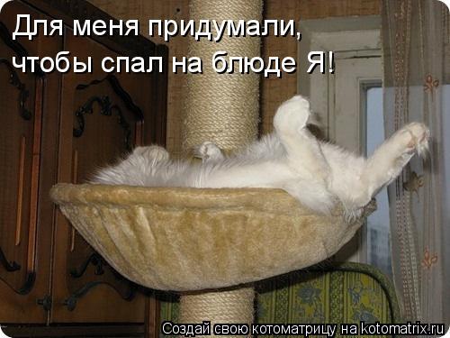 Котоматрица: Для меня придумали, чтобы спал на блюде Я!