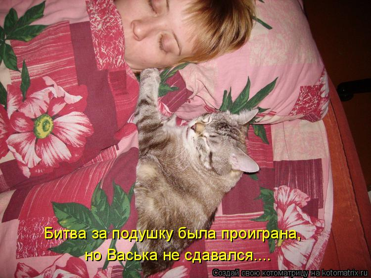 Котоматрица: Битва за подушку была проиграна,  но Васька не сдавался....