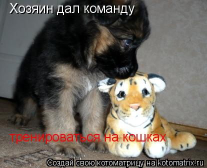 Котоматрица: Хозяин дал команду  тренироваться на кошках