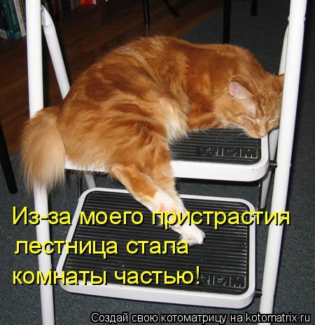 Котоматрица: Из-за моего пристрастия лестница стала комнаты частью!