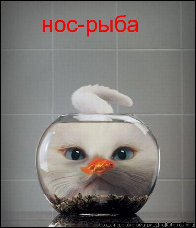 Котоматрица: нос-рыба