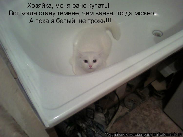 Котоматрица: Хозяйка, меня рано купать! Вот когда стану темнее, чем ванна, тогда можно.  А пока я белый, не трожь!!!