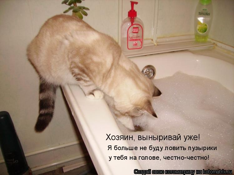 Котоматрица: Хозяин, выныривай уже! Я больше не буду ловить пузырики  у тебя на голове, честно-честно!