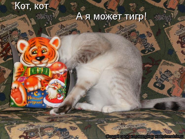Котоматрица: Кот, кот А я может тигр!