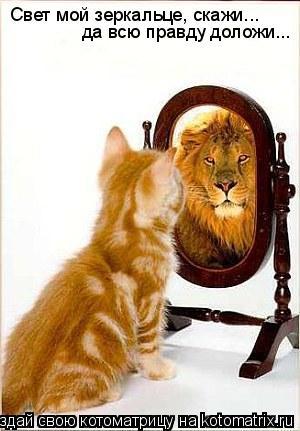Котоматрица: Свет мой зеркальце, скажи... да всю правду доложи...