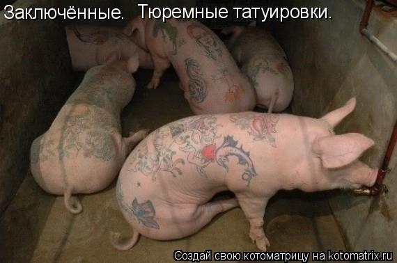 Котоматрица: Заключённые. Тюремные татуировки.