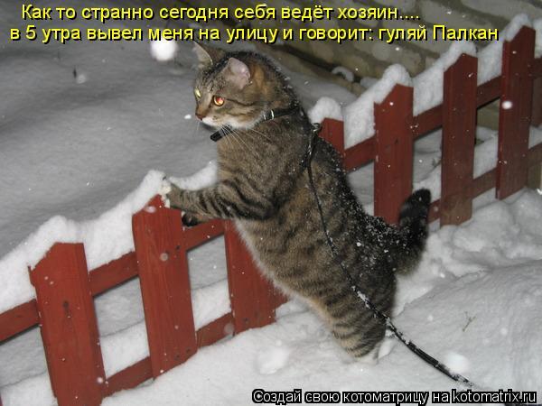 Котоматрица: Как то странно сегодня себя ведёт хозяин.... в 5 утра вывел меня на улицу и говорит: гуляй Палкан