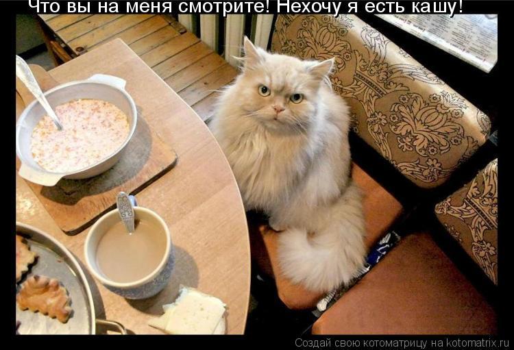 Котоматрица: Что вы на меня смотрите! Что вы на меня смотрите! Нехочу я есть кашу!