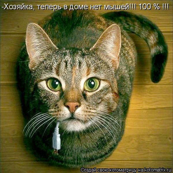 Котоматрица: -Хозяйка, теперь в доме нет мышей!!! 100 % !!!