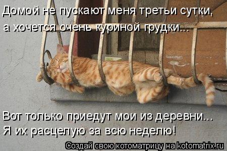 Котоматрица: Домой не пускают меня третьи сутки, а хочется очень куриной грудки... Вот только приедут мои из деревни... Я их расцелую за всю неделю!