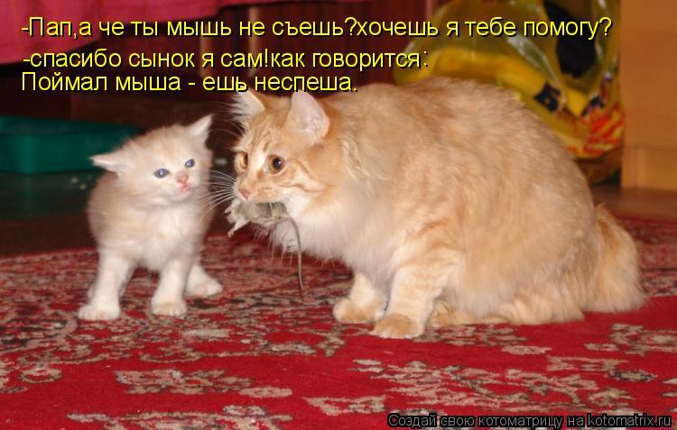 Котоматрица: -Пап,а че ты мышь не съешь?хочешь я тебе помогу? -спасибо сынок я сам!как говорится  : Поймал мыша - ешь неспеша.