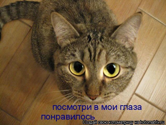 Котоматрица: посмотри в мои глаза посмотри в мои глаза понравилось