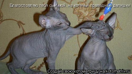 Котоматрица: Благословляю тебя сын мой, на котячьи праведные делишки
