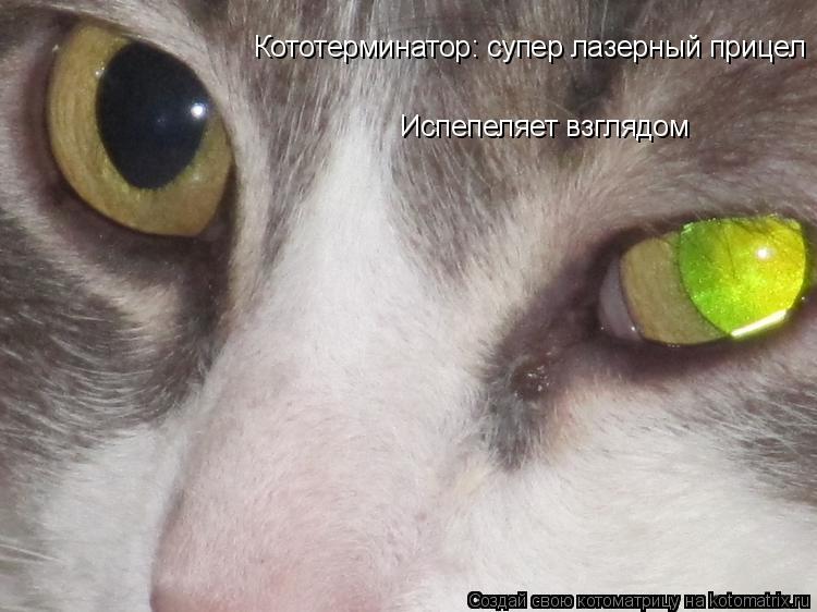 Котоматрица: Кототерминатор: супер лазерный прицел Испепеляет взглядом