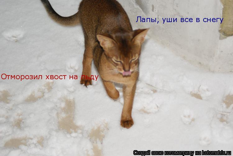Котоматрица: Лапы, уши все в снегу Отморозил хвост на льду