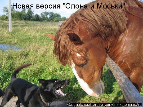 """Котоматрица: Новая версия """"Слона и Моськи"""""""