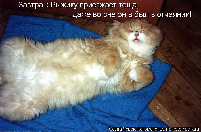 Котоматрица: Завтра к Рыжику приезжает тёща,   даже во сне он в был в отчаянии!
