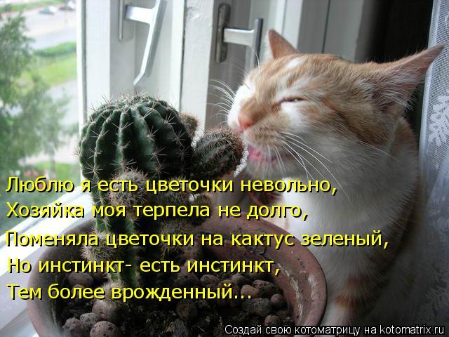 Котоматрица: Люблю я есть цветочки невольно, Хозяйка моя терпела не долго, Поменяла цветочки на кактус зеленый, Но инстинкт- есть инстинкт,  Тем более вро