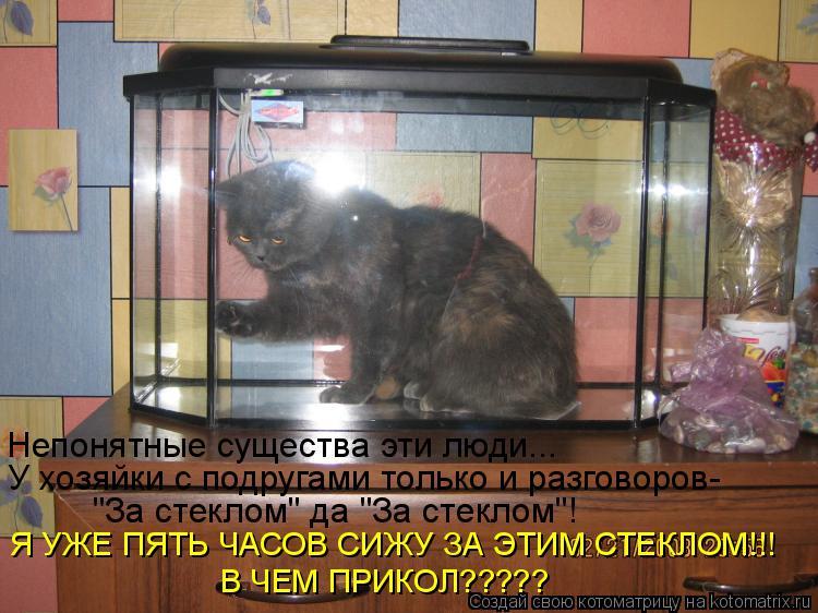 """Котоматрица: Непонятные существа эти люди... У хозяйки с подругами только и разговоров- """"За стеклом"""" да """"За стеклом""""! Я УЖЕ ПЯТЬ ЧАСОВ СИЖУ ЗА ЭТИМ СТЕКЛОМ!!!"""