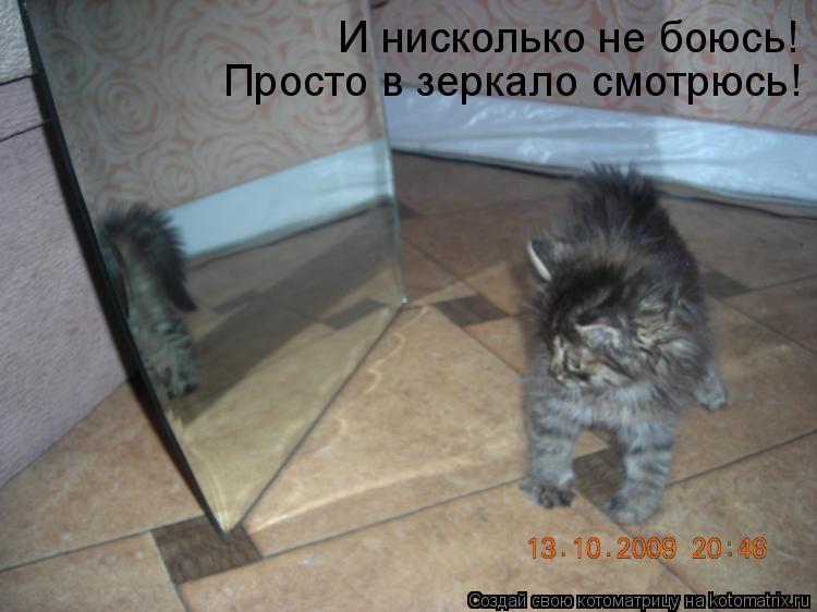 Котоматрица: И нисколько не боюсь! Просто в зеркало смотрюсь!