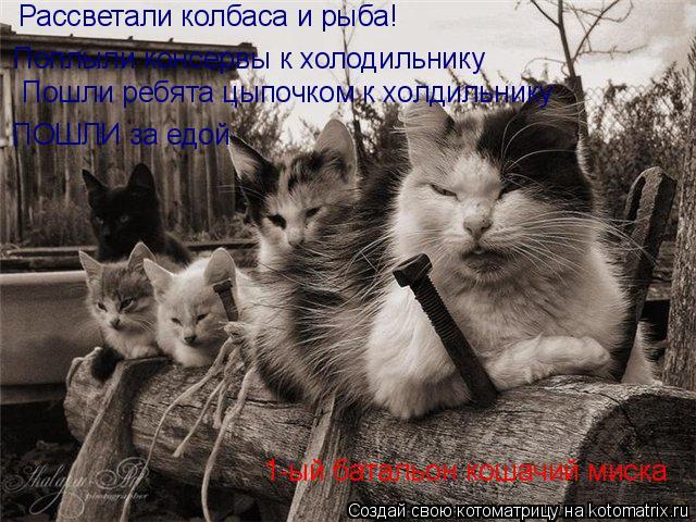 Котоматрица: Рассветали колбаса и рыба! Поплыли консервы к холодильнику Пошли ребята цыпочком к холдильнику ПОШЛИ за едой 1-ый батальон кошачий миска