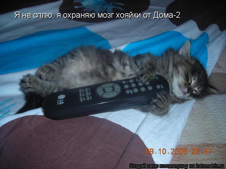Котоматрица: Я не сплю, я охраняю мозг хояйки от Дома-2
