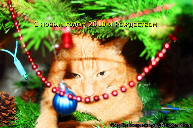 Котоматрица: C новым годом 2010 и Рождеством