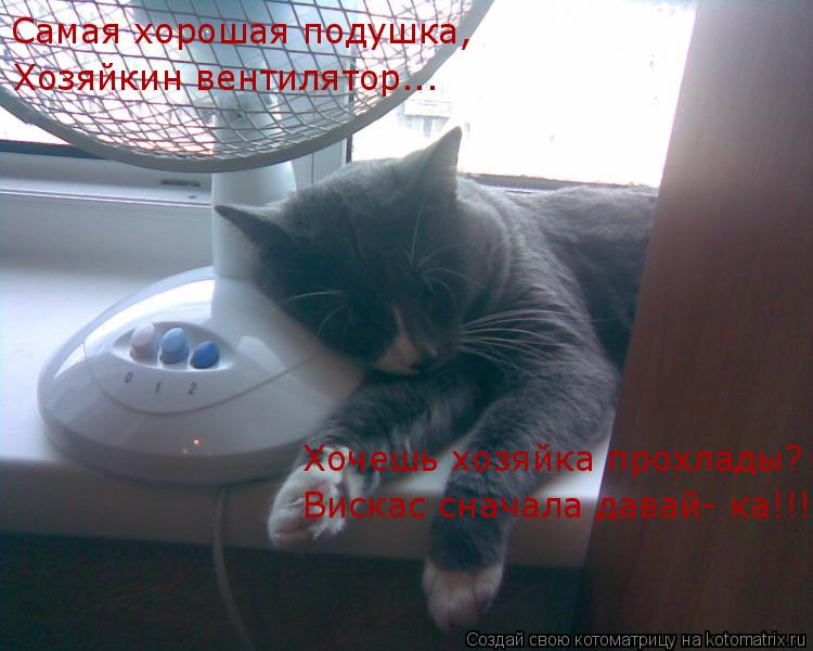 Котоматрица: Самая хорошая подушка, Хозяйкин вентилятор... Хочешь хозяйка прохлады? Вискас сначала давай- ка!!!