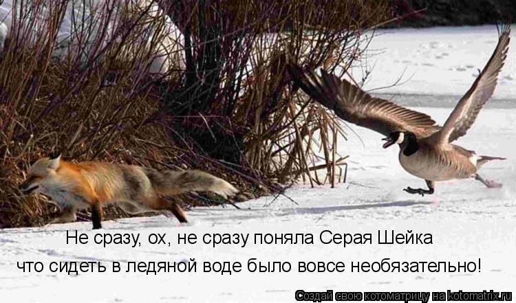 Котоматрица: Не сразу, ох, не сразу поняла Серая Шейка что сидеть в ледяной воде было вовсе необязательно!