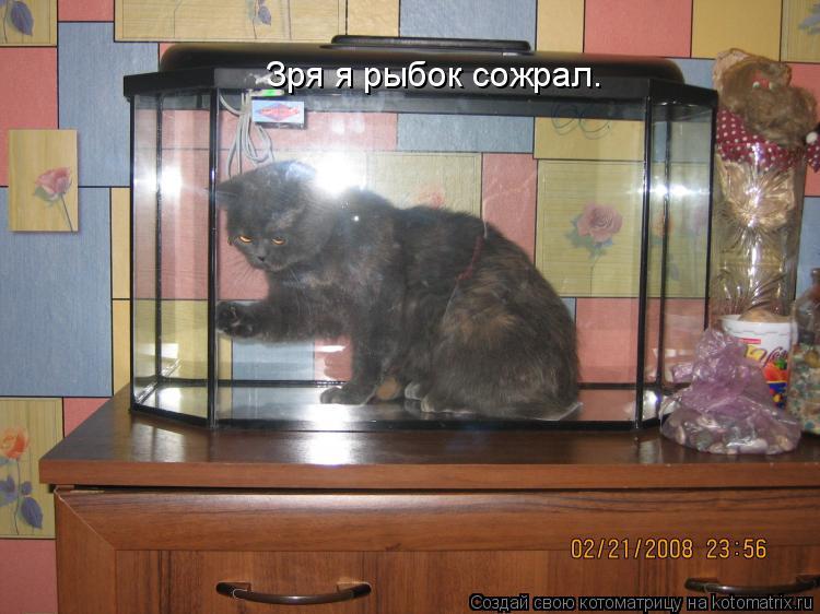 Котоматрица: Зря я рыбок сожрал.